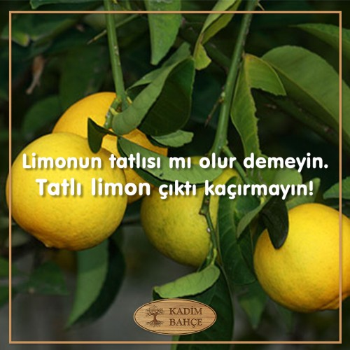 Tatlı Limon Paketi